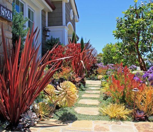 Rogers Gardens California Natives